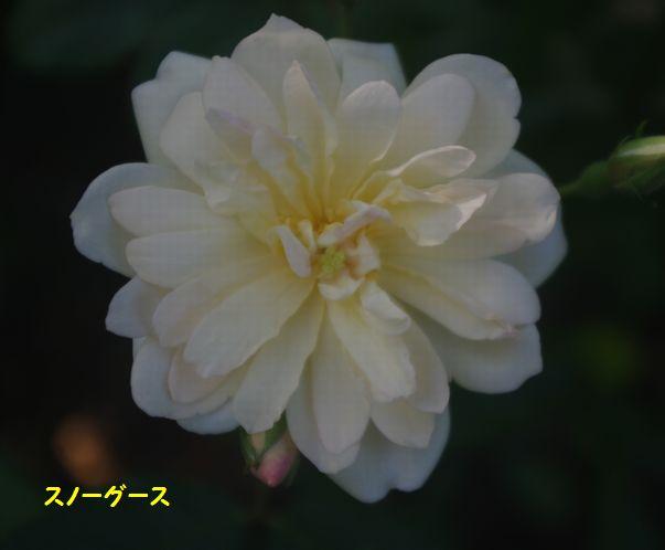 IMGP1993.JPG