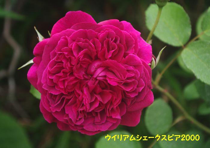 IMGP5746.JPG