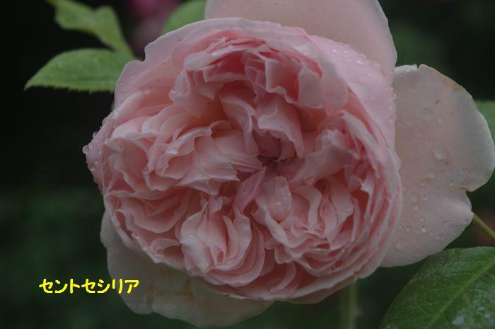 IMGP5781.JPG