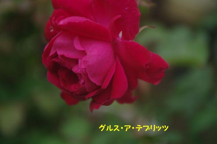 IMGP9018.JPG