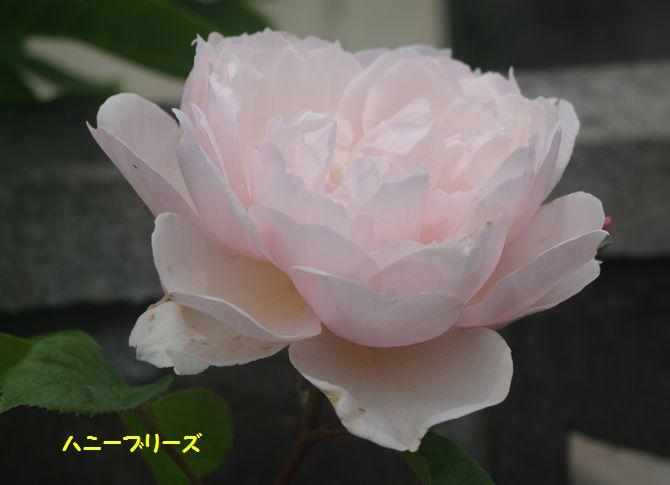 IMGP2060.JPG