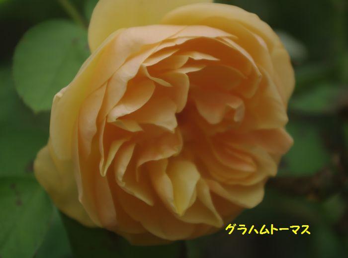 IMGP3273.JPG