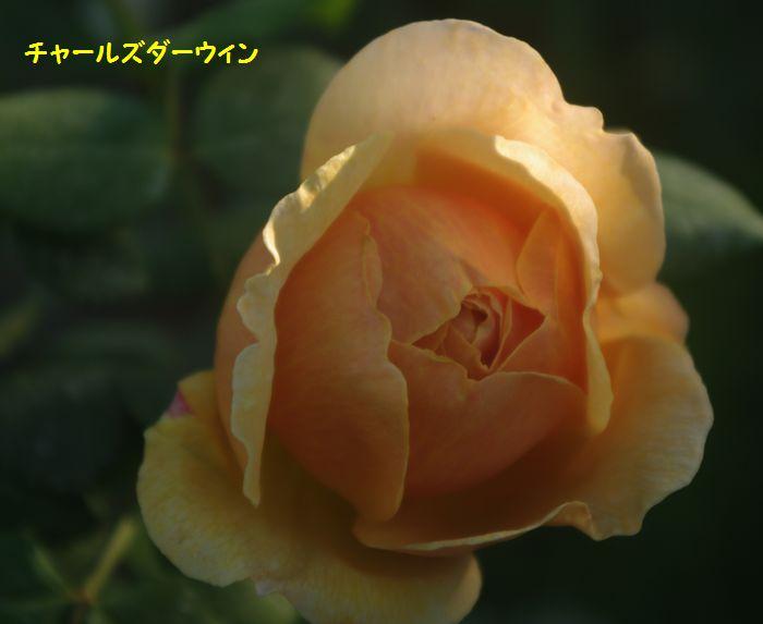 IMGP5569.JPG