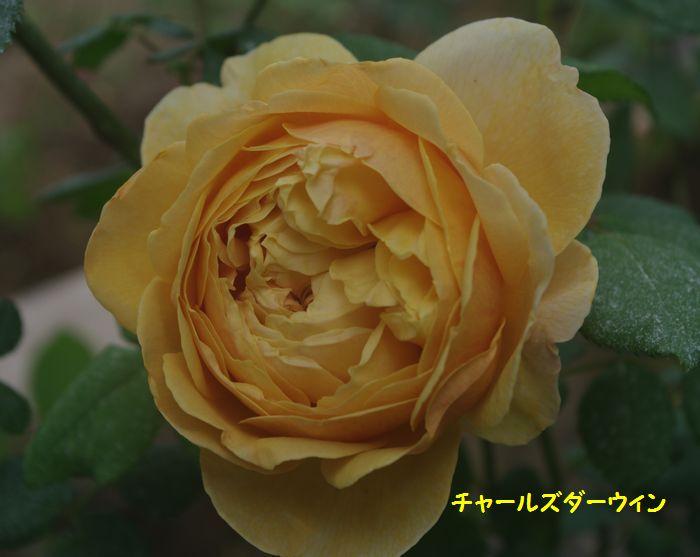 IMGP5602.JPG
