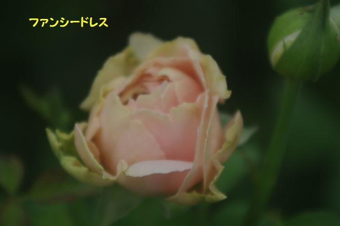 IMGP6402.JPG